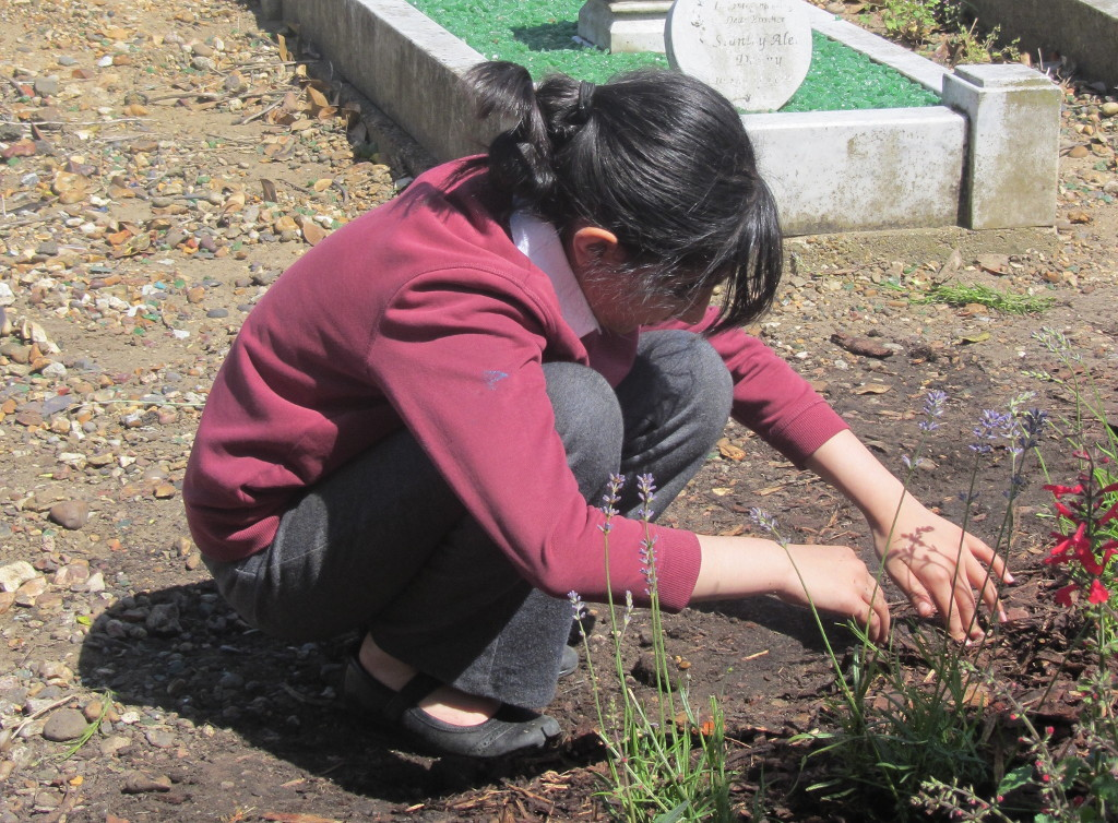 Queens Road Cemetery planting June 2014 smaller